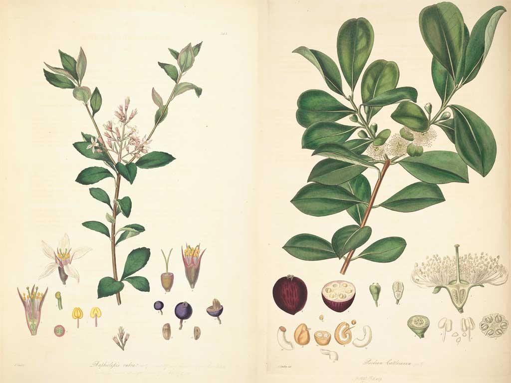 botanica_1