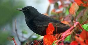 merlo-birdatching-natura-lipu