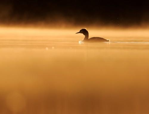 L'Anima di un Lago