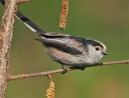 Corso Natura e Birdwatching a Livorno