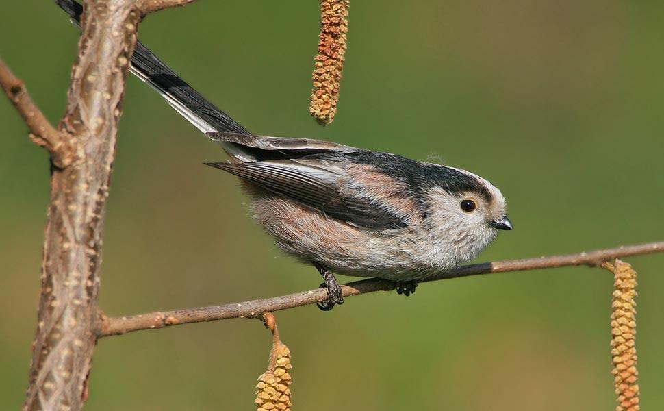 Bird watching incontri UK
