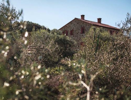 "Itinerario: Riserva – Az. Agricola ""Le Macchie""."
